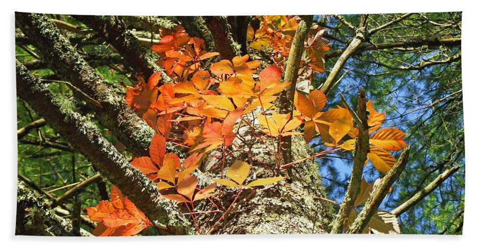 Duane Mccullough Beach Towel featuring the photograph Fall Ivy On Pine Tree by Duane McCullough
