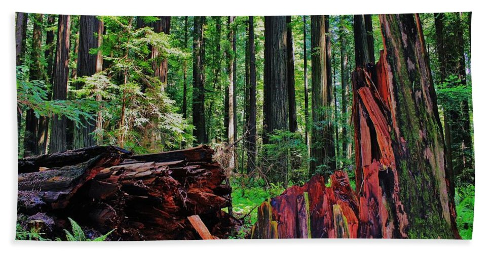 California Beach Towel featuring the photograph Fallen Giant by Benjamin Yeager