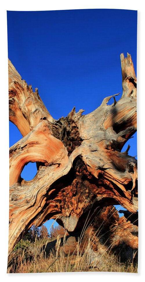 Tree Roots Beach Towel featuring the photograph Fallen by Shane Bechler