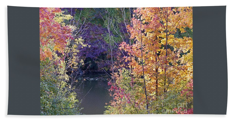 Fall Beach Towel featuring the photograph Fanciful Forest by Ann Horn