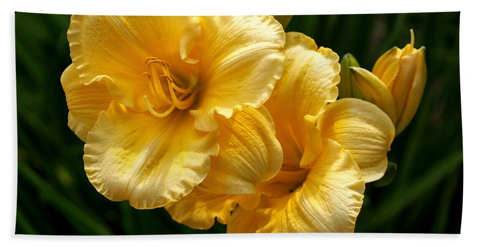 Lilies Beach Towel featuring the photograph Fancy Yellow Daylilies by Rona Black