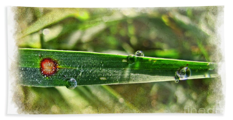 Nature Beach Towel featuring the photograph Fantastic Dew by Debbie Portwood