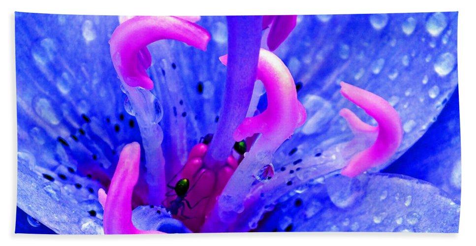 Duane Mccullough Beach Towel featuring the photograph Fantasy Flower 6 by Duane McCullough