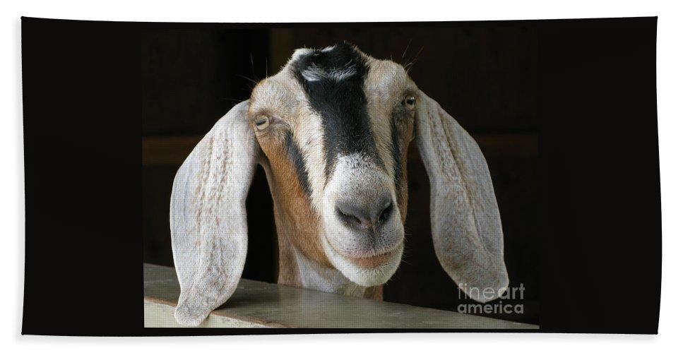 Goat Beach Towel featuring the photograph Farm Favorite by Ann Horn