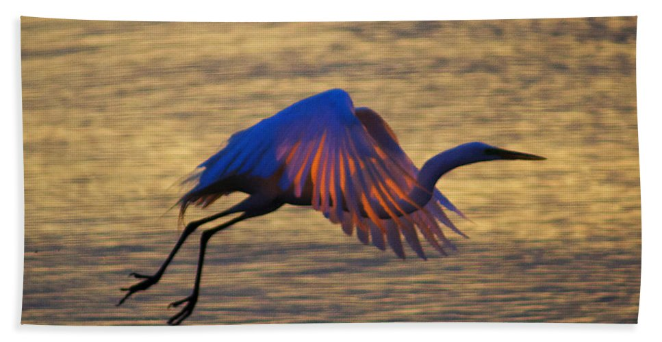 Egret Beach Towel featuring the photograph Feather-light by Joe Geraci