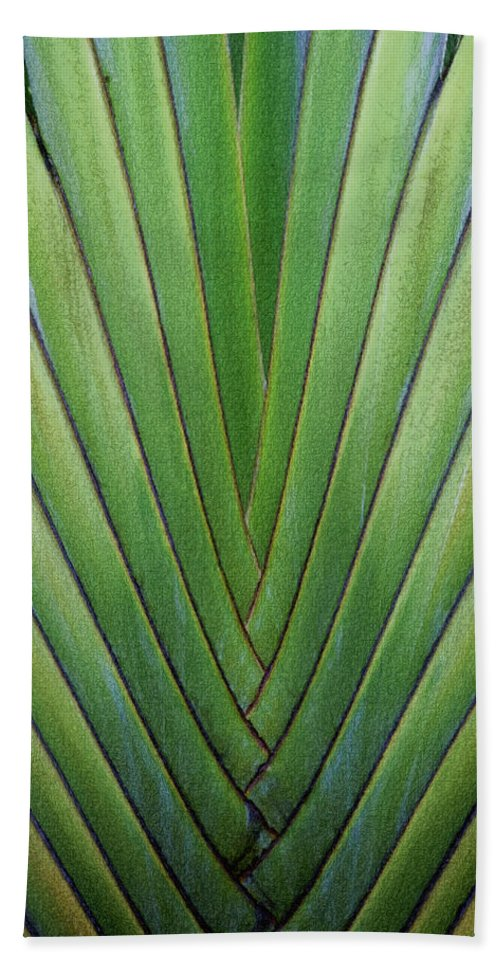 Dominican Republic Beach Towel featuring the digital art Fern - Colored Photo 1 by David Lange