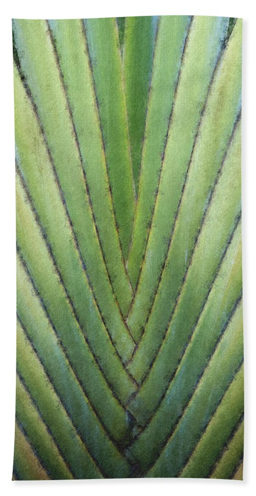 Dominican Republic Beach Towel featuring the digital art Fern - Pastel Chalk 2 by David Lange