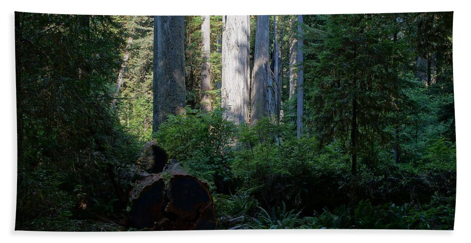Ferns Beach Towel featuring the photograph Ferns Of The Redwood Forest by Mick Anderson