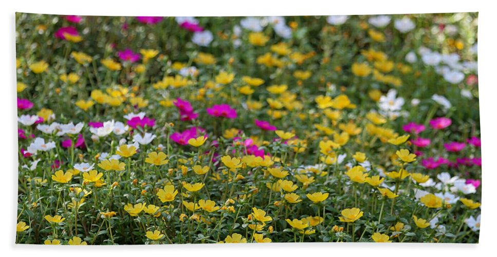 Art Beach Towel featuring the photograph Field Of Pretty Flowers by Sabrina L Ryan