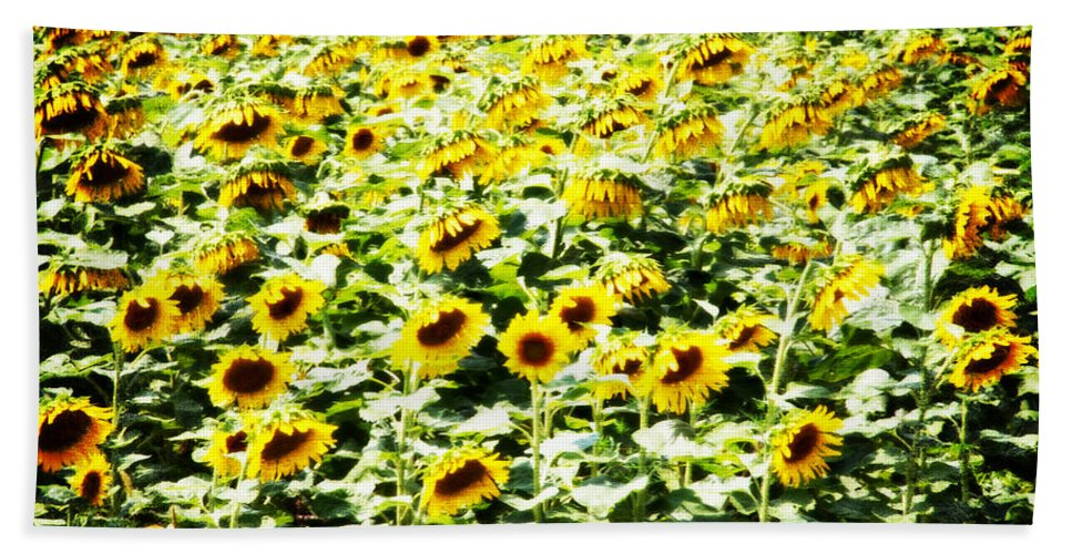 Sunflowers Beach Towel featuring the photograph Field of Sunflowers by Alice Gipson