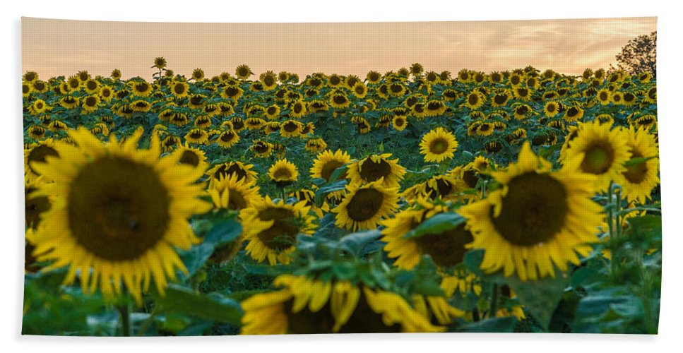 New Jersey Beach Towel featuring the photograph Fields Of Yellow by Kristopher Schoenleber