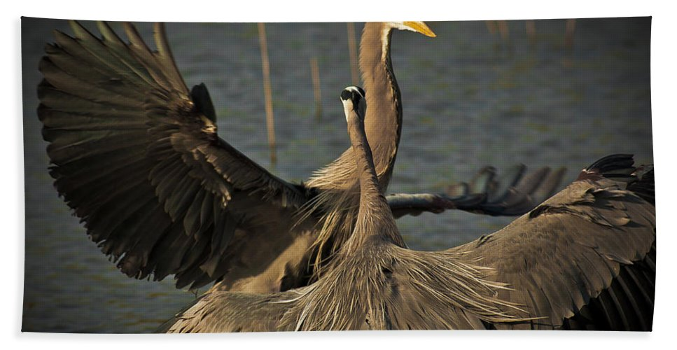 Animal Beach Towel featuring the photograph Fighting Great Blue Herons by Robert Frederick