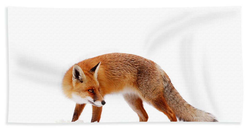 Fox Beach Towel featuring the photograph Fire 'n Ice by Roeselien Raimond
