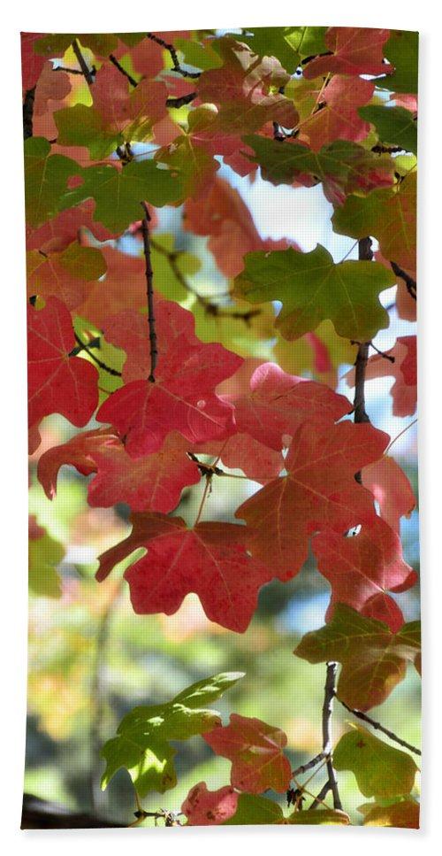Fall Foliage Beach Towel featuring the photograph First Signs Of Fall by Saija Lehtonen