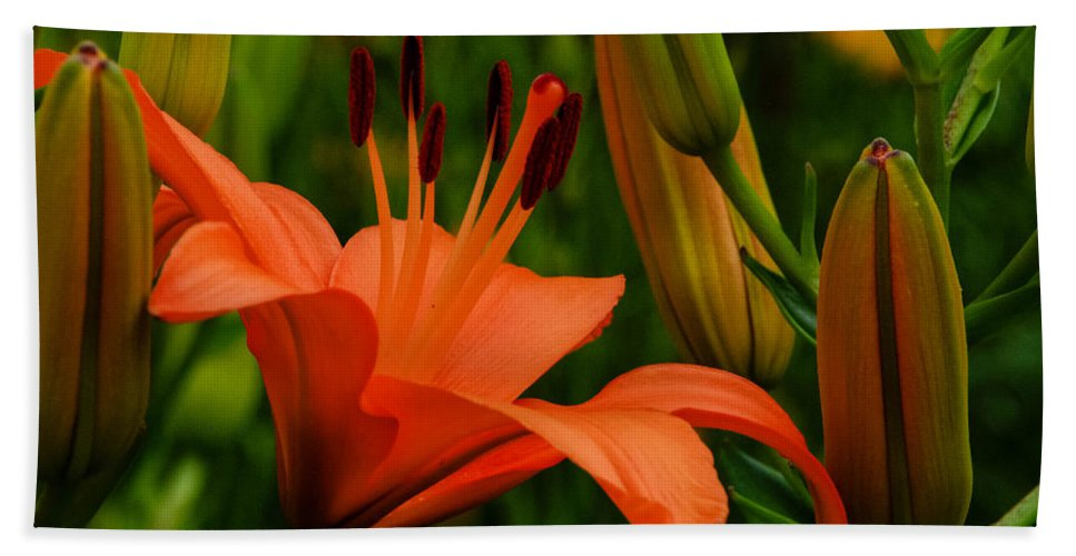 Tiger Lilly Beach Towel featuring the photograph First To Bloom by Grace Grogan