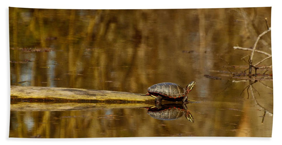 Painted Turtle Beach Towel featuring the photograph First Turtle by Thomas Young