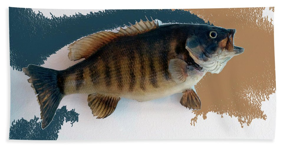 Animals Beach Towel featuring the photograph Fish Mount Set 10 Cc by Thomas Woolworth