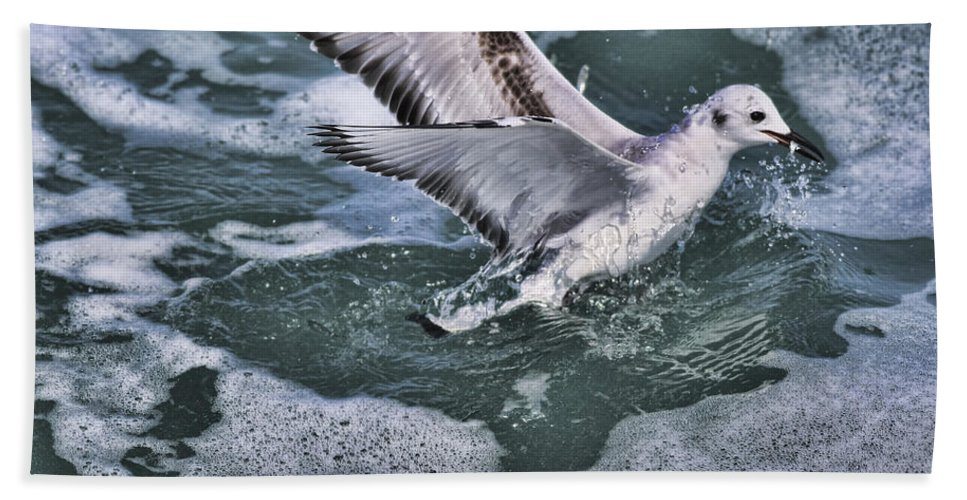 Seagull Beach Towel featuring the photograph Fishing In The Foam by Deborah Benoit