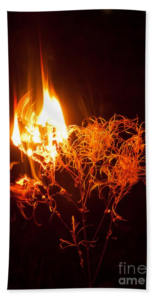 Flame Beach Towel featuring the photograph Flaming Seedheads by Liz Leyden