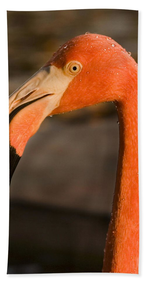 3scape Beach Sheet featuring the photograph Flamingo by Adam Romanowicz