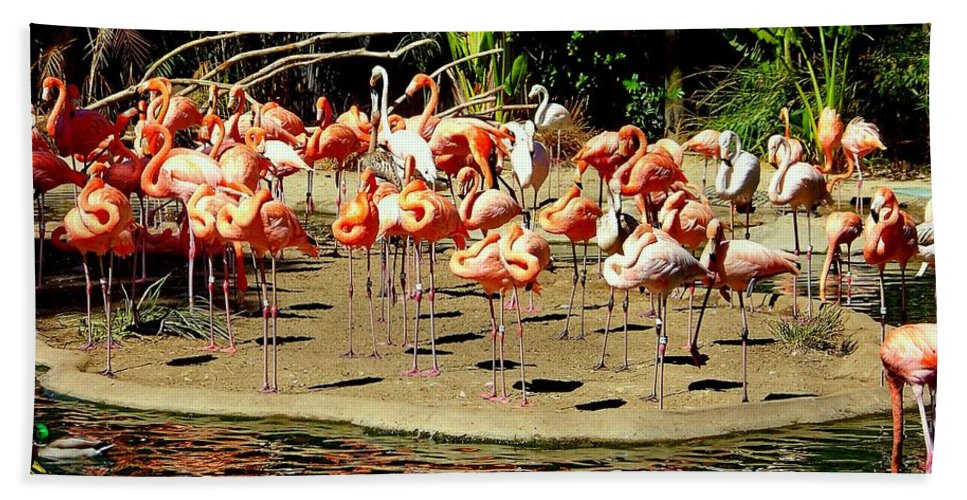 Flamingos Beach Towel featuring the photograph Flamingo Family Reunion by Karen Wiles