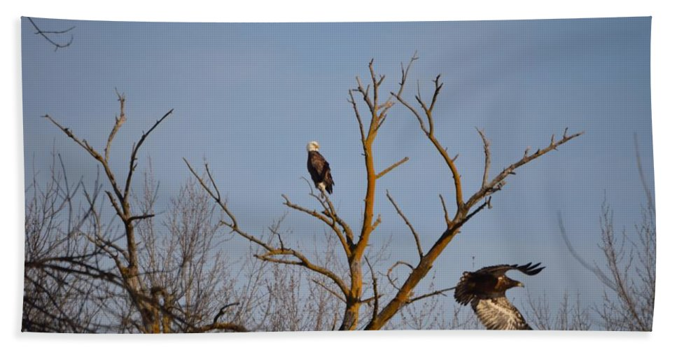Bald Eagles Beach Towel featuring the photograph Flight by Bonfire Photography