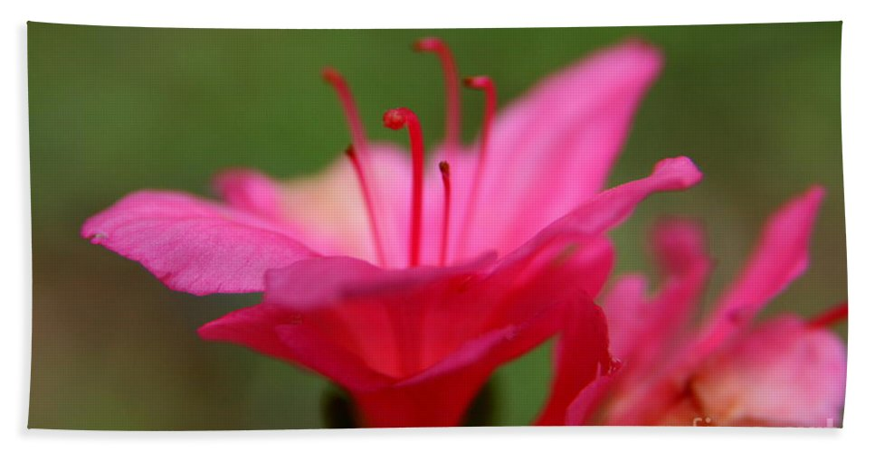 Pink Floral Beach Towel featuring the photograph Floral Rosa by Neal Eslinger