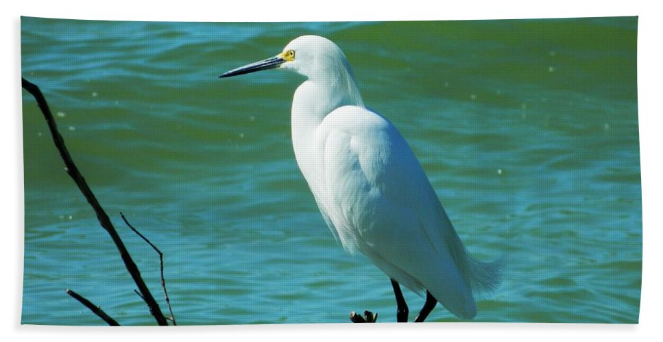 Egret Beach Towel featuring the photograph Florida Egret by Terri Waselchuk