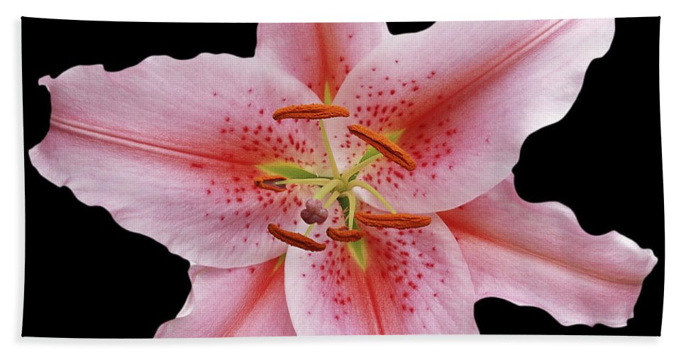 Flower Portrait Beach Towel featuring the photograph Flower 002 by Ingrid Smith-Johnsen
