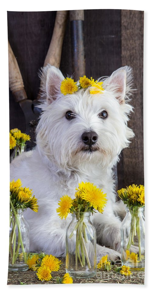 Dog Beach Towel featuring the photograph Flower Child by Edward Fielding