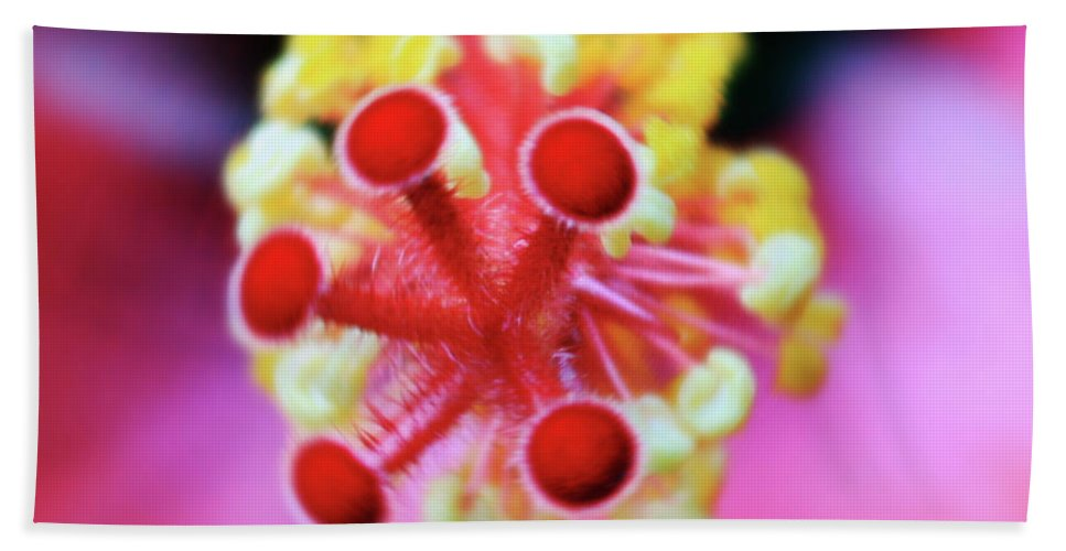 Roses Beach Towel featuring the photograph Flower In Pink by Mark Ashkenazi