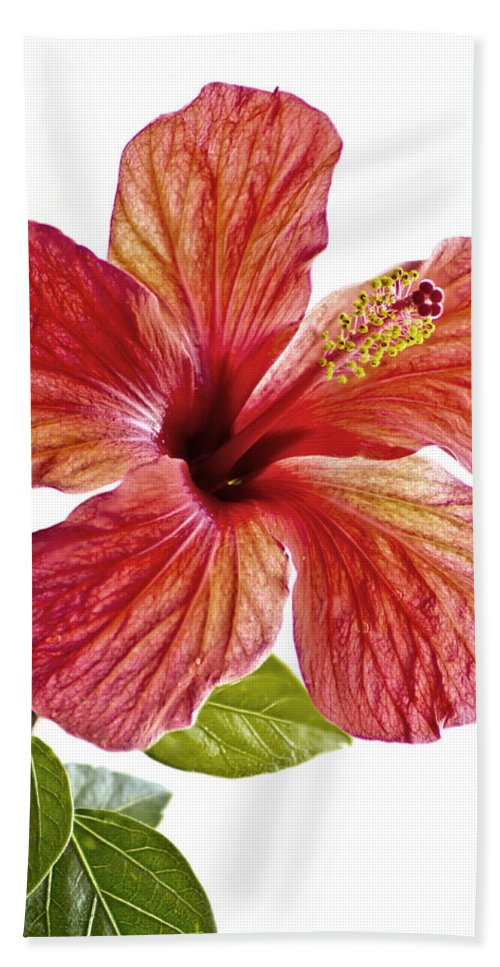 Closeup Beach Towel featuring the photograph Flower by Paulo Goncalves