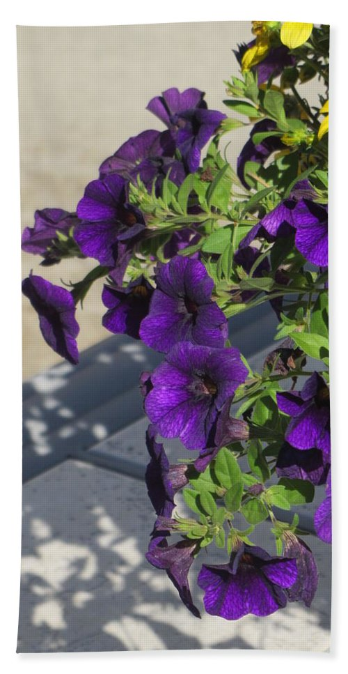 Flowers Beach Towel featuring the photograph Flower Pot and Shadows 1 by Anita Burgermeister