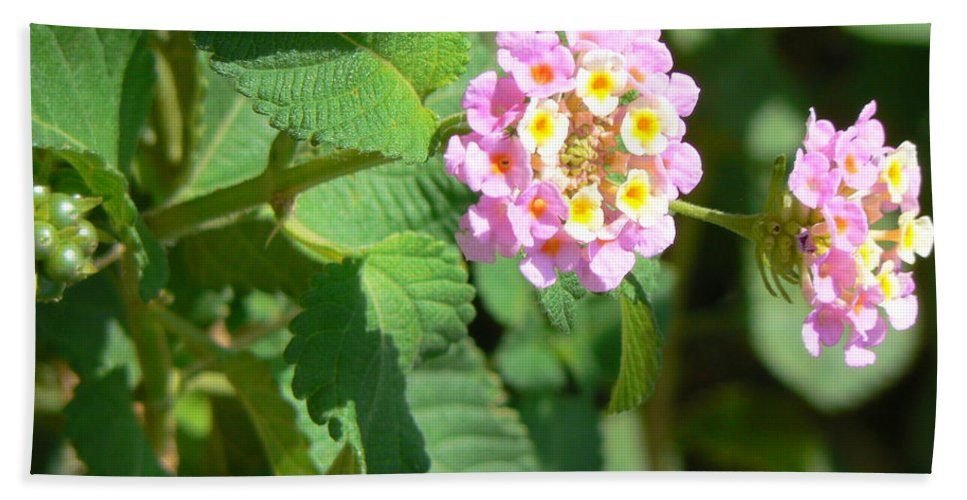 Israel Beach Towel featuring the photograph Flowers Of Pink And Orange by Katerina Naumenko
