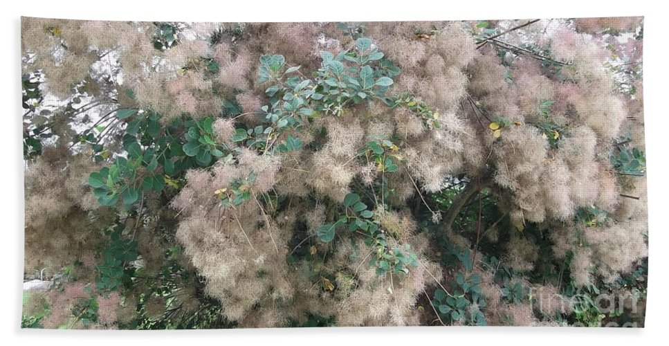 Fluffy Blossom Beach Towel featuring the photograph Fluffy Blossom by Tracey Williams