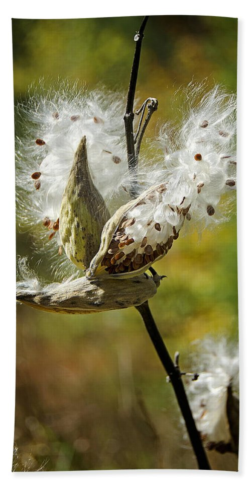 Milkweeds Beach Towel featuring the photograph Fly Me Away by Donna Doherty