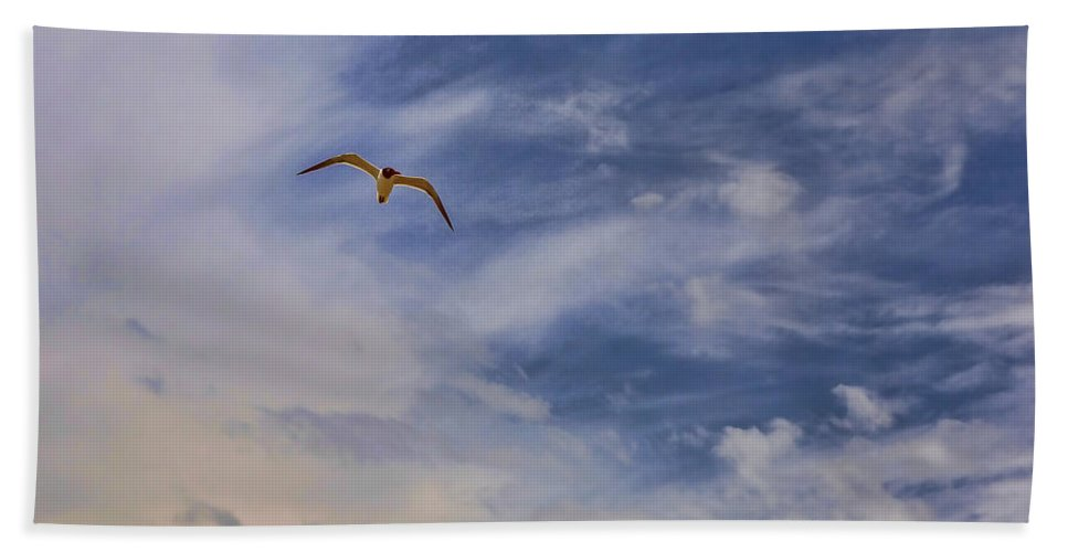 Seagull Beach Towel featuring the photograph Fly To Your Tomorrow by Sennie Pierson