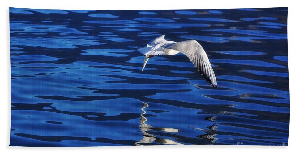 Bird Beach Towel featuring the photograph Flying Bird by Mats Silvan