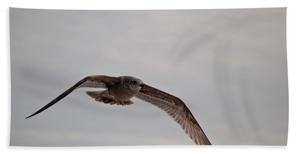 Seagull Beach Towel featuring the photograph Flying High by Jon Cody