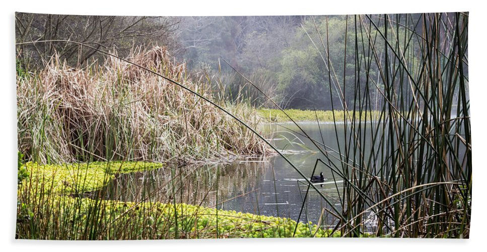 American Coot Beach Towel featuring the photograph Foggy Lake by Kate Brown