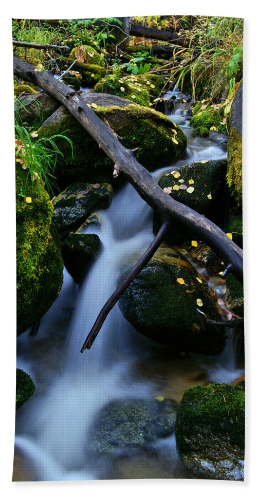Fall Foliage Beach Towel featuring the photograph Follow Me by Jeremy Rhoades