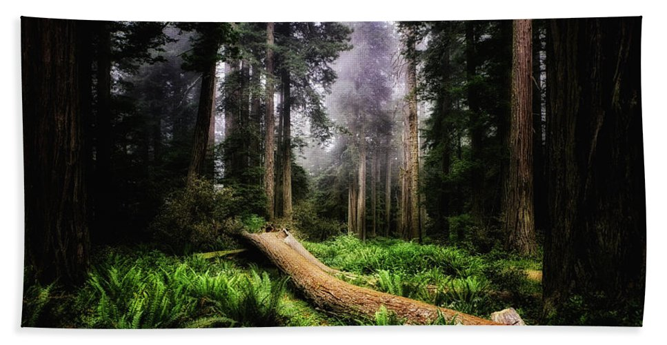 America Beach Towel featuring the photograph Forest 6 by Ingrid Smith-Johnsen
