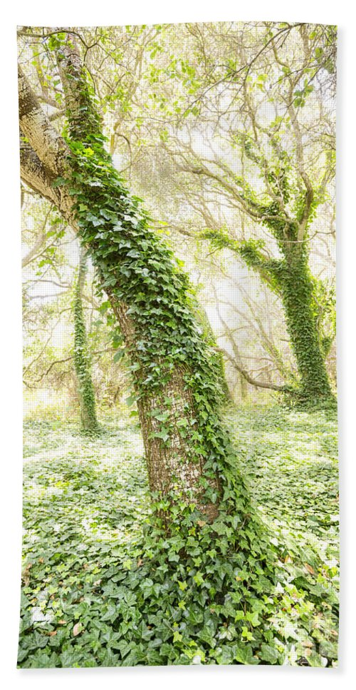 Los Osos Oak State Natural Reserve Beach Towel featuring the photograph Forest Glow - The Magical Trees Of The Los Osos Oak Reserve by Jamie Pham