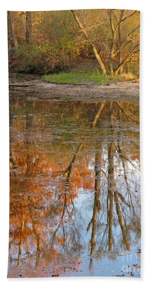 Autumn Beach Towel featuring the photograph Forest Glow by Ann Horn