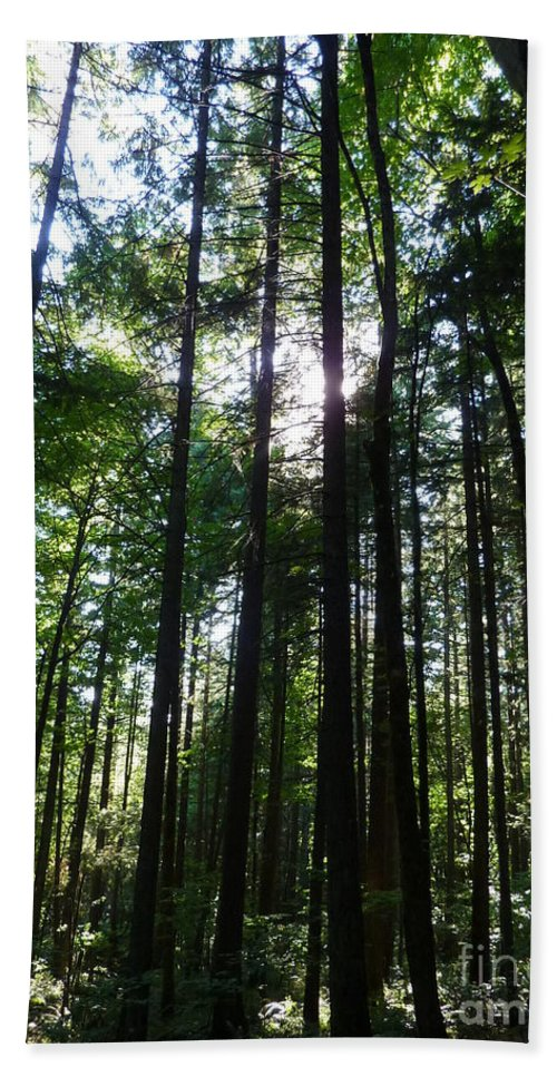 Trees Beach Towel featuring the photograph Forest Light by Rain Shine