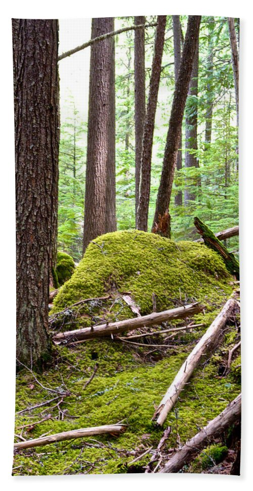 Forest With Moss-covered Rocks Beach Towel featuring the photograph Forest With Moss-covered Rocks Along John's Lake Trail In Glacier Np-mt by Ruth Hager