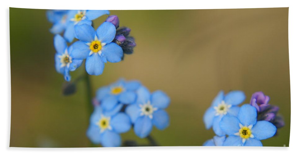 Blue Beach Towel featuring the photograph Forget Me Not 01 - S01r by Variance Collections