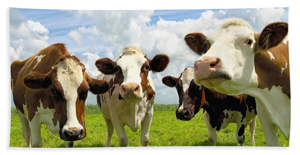 Agriculture Beach Towel featuring the photograph Four Chatting Cows by Jan Brons