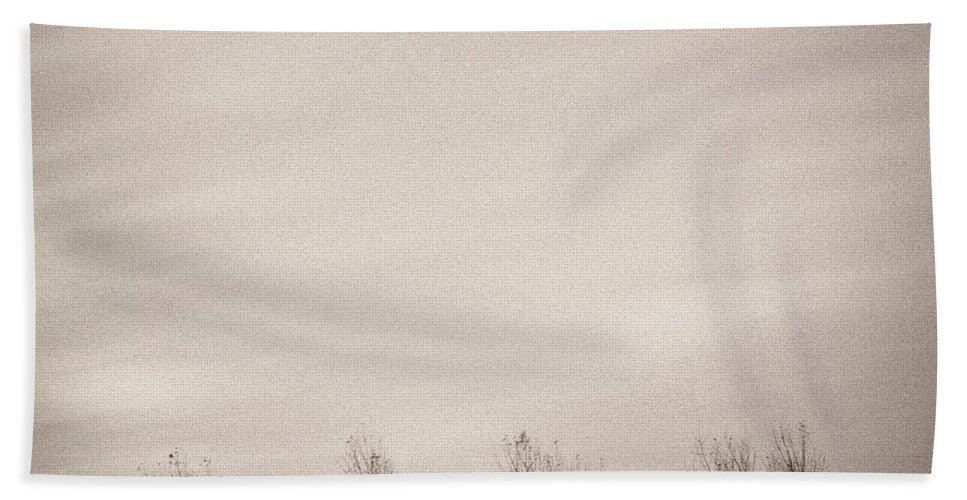 Trees Beach Towel featuring the photograph Four Trees by Dave Bowman