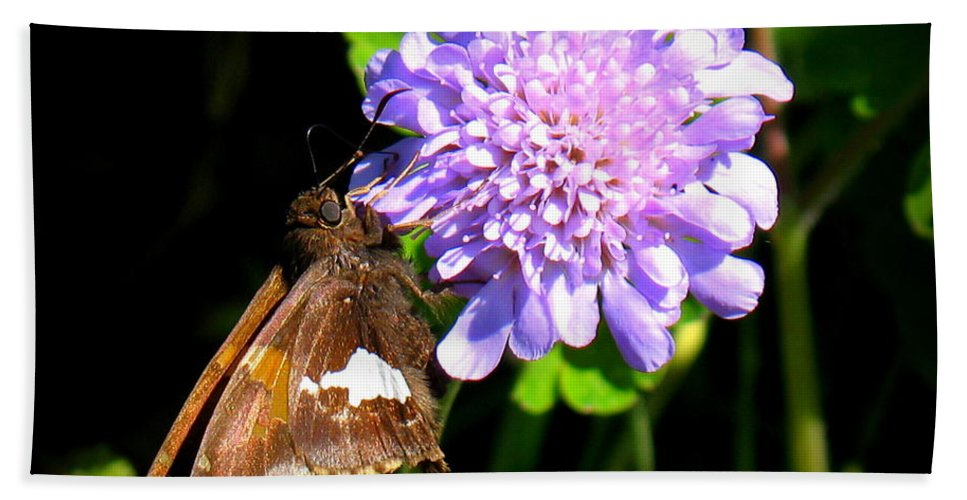 Silver Spotted Skipper Beach Towel featuring the photograph Silver Spotted Skipper by Patti Whitten